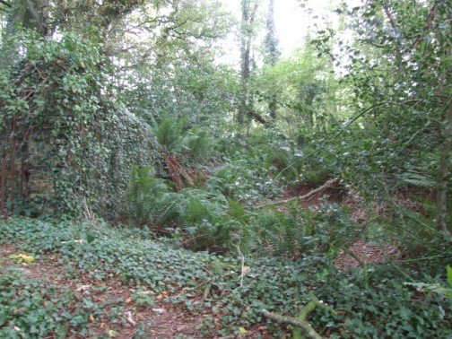 Deep ditch surrounding old rath and burial ground at Corlican