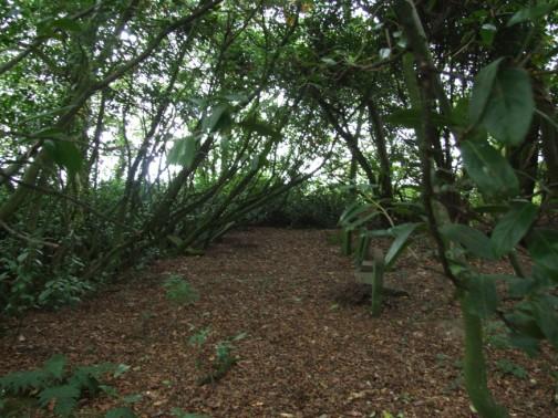 Laurel tree enclosure in Corlican Burial Ground